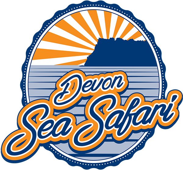 Devon Sea Safari